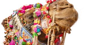マクラメ camel ラクダ